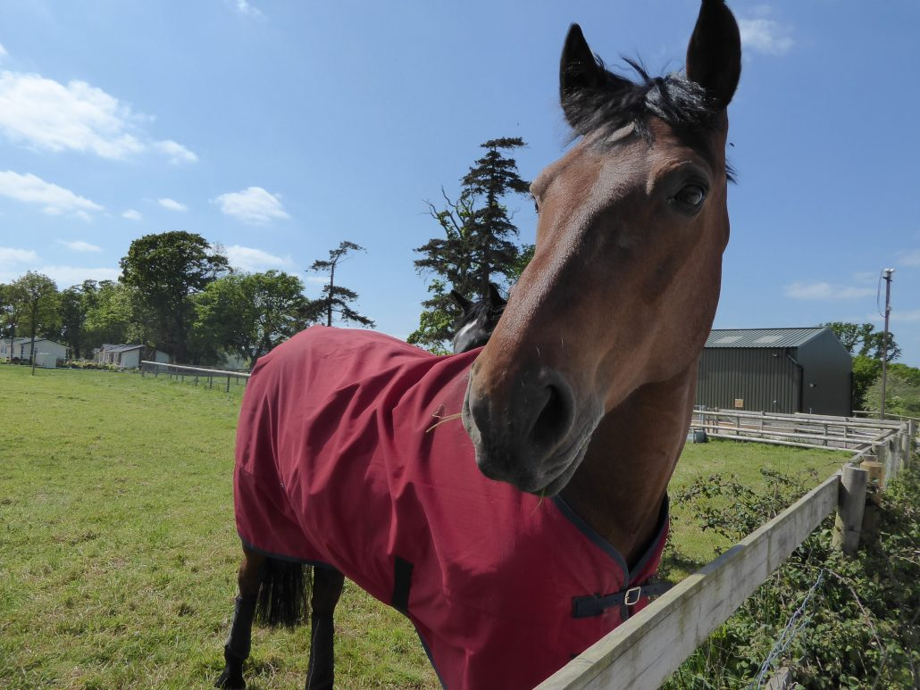 Horse on farmland at Organford Manor
